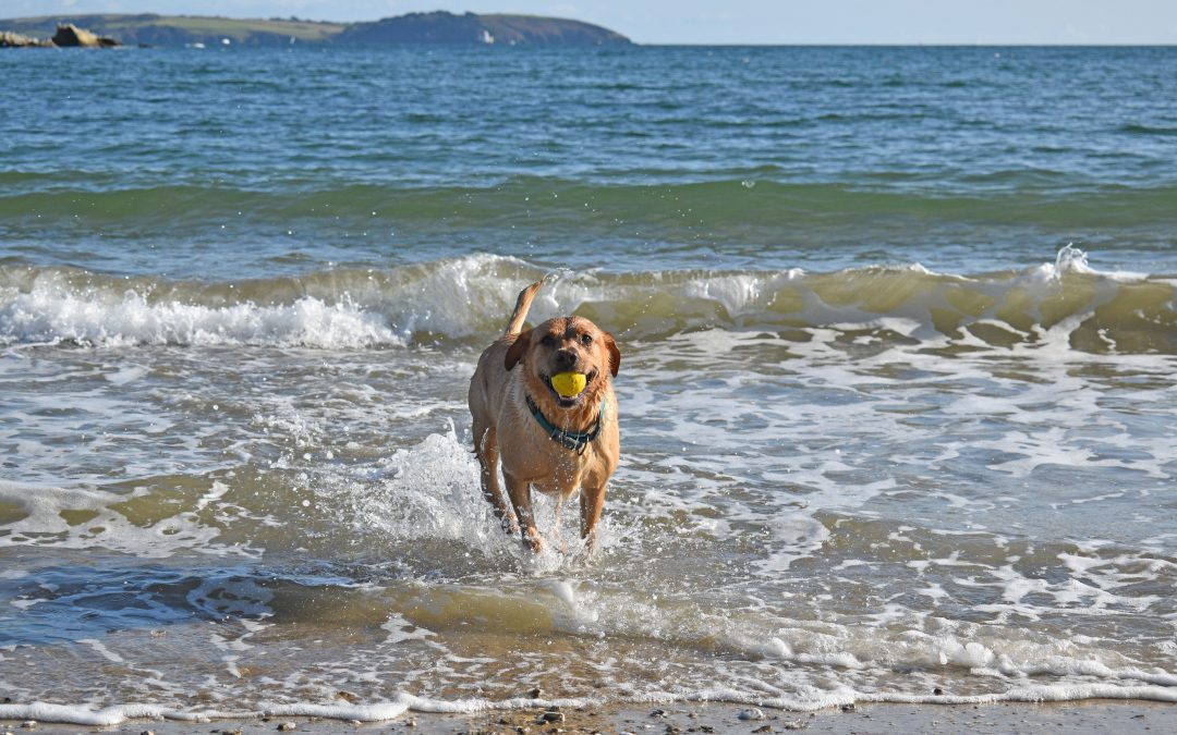 Dogs given more freedom on beaches