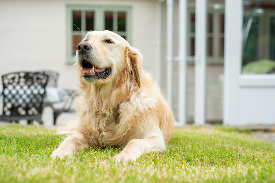 Why Sara's Cottage is the dream destination for dogs!